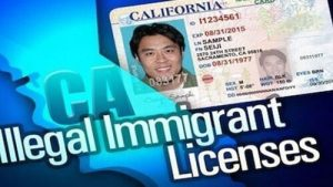 illegal immigrant drivers license graphic